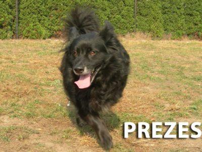 hotel_dla_psow_ozorkow_zgierz_the_best_dog_leczyca_szkolenie_psa_behawiorystka_joanna_chmielewska_cichala_zoopsycholog