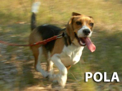 hotel_dla_psow_ozorkow_zgierz_the_best_dog_leczyca_szkolenie_psa_joanna_chmielewska_terapia_behawioralna