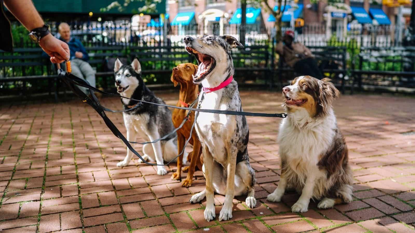 Hotel dla psów the best dog szkolenia