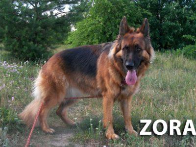 hotel_dla_psow_the_best_dog_ozorkow_leczyca_szkolenie_psa_psi_psycholog_joanna_chmielewska_zgierz_cichala