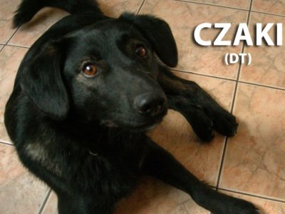 hotel_dla_psow_the_best_dog_ozorkow_zgierz_leczyca_tresura_psa_zoopsycholog_joanna_cichala_lodz