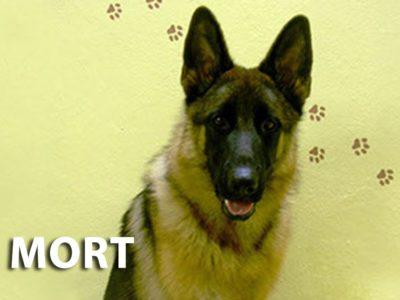 hotel_dla_zwierzat_the_best_dog_ozorkow_zgierz_lodz_leczyca_szkolenie_psa_behawiorystka_joanna_chmielewska_cichala_porady_zoopsychologa
