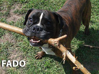 hotel_the_best_dog_ozorkow_zgierz_leczyca_tresura_psa_zoopsycholog_joanna_chmielewska_indywidualne_szkolenie_psow